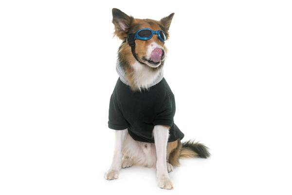 Den Hund vor Sonnenbrand schützen