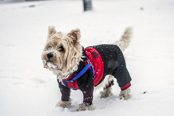 Hundemantel für den Winter