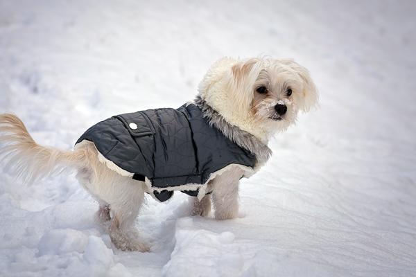 Ein Hundemantel schützt im Winter vor Kälte