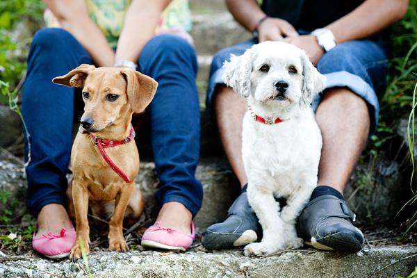 Hundebesitzer mit verschiedenen Hunderassen