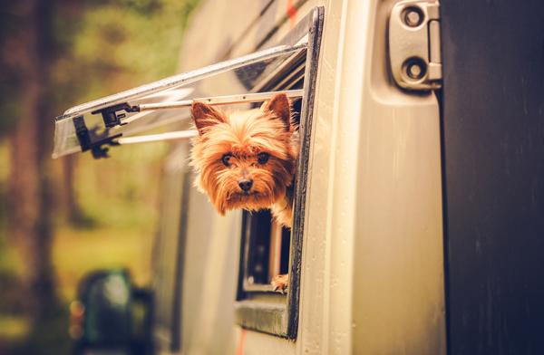 Hund im Auto - Vorsicht vor Hitzeschlag