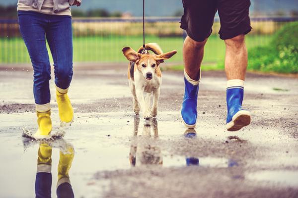 Regenspaziergang mit dem Hund trotz Hundewetter