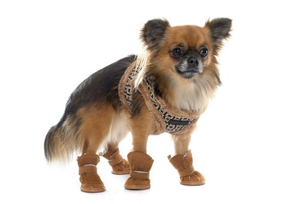 Hundeschuhe schützen die Hundepfoten im Winter