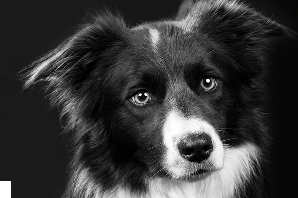 Hundemantel, Hundejacken, Hundewesten