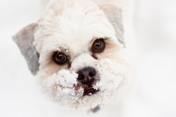 Kleiner Hund spielt im Schnee