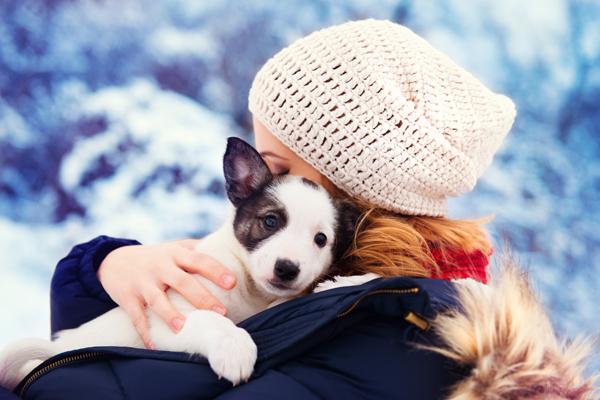 Welpen im Winter vor Unterkühlung schützen
