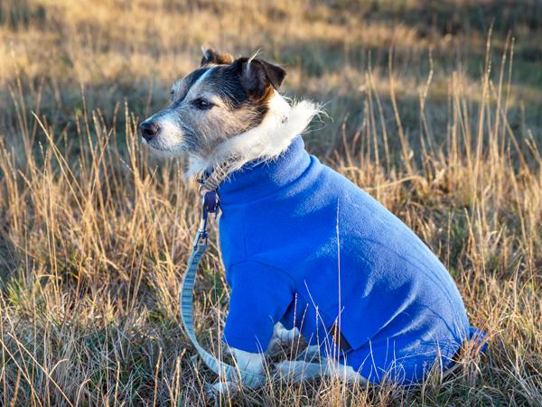 Blauer Hundemantel für den Winter